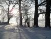Blick durch die winterlichen Bäume